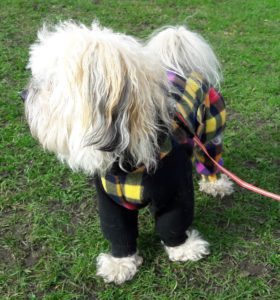 East of Scotland Canine Club